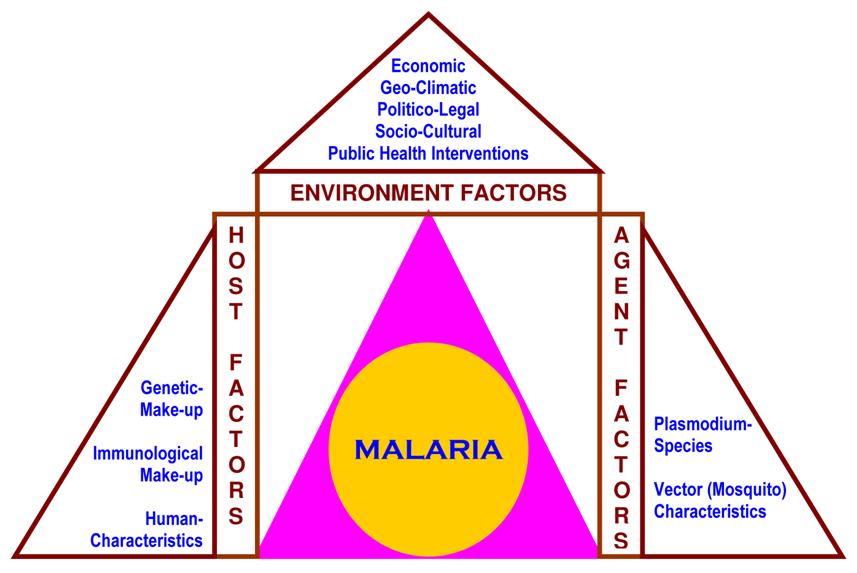 figure 1  factors of epidemiological triad  i e   different co