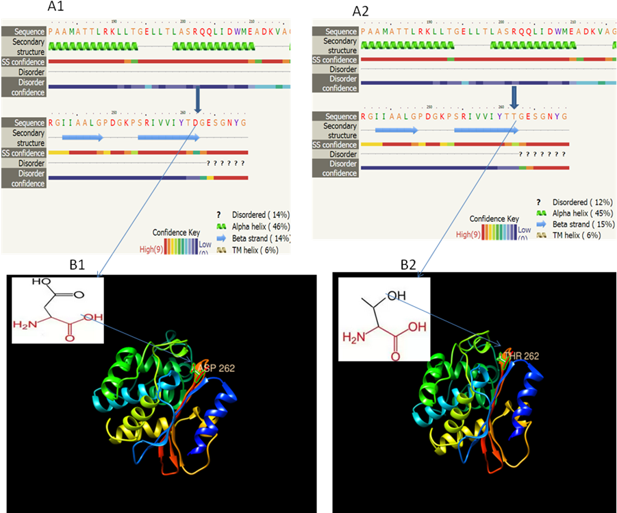 molecular characterization and in silico analysis of a novel mutation in tem