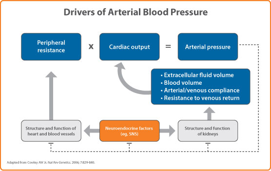 the relationship of cardiac output and arterial pressure control