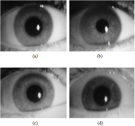 iris dissertation daugman Iris biometrics: template protection and advanced in dieser kumulativen dissertation werden verfahren zum schutz iris was proposed by j g daugman.