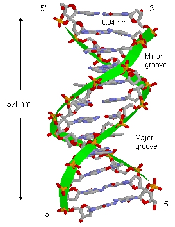 cisplatin mechanism of action pdf
