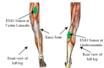 EMG Signals for Co-Activations of Major Lower Limb Muscles in Knee ...