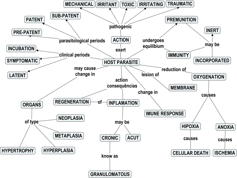 Immunity Concept Map.Figure 1 Concept Map Built By Group 1 Teaching Parasitology With