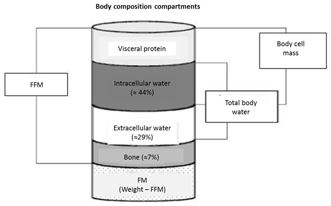 Analysis of Body Composition: A Critical Review of the Use