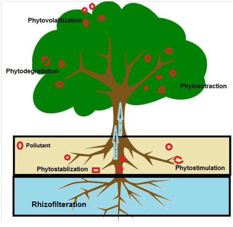 Status of Phytoremediation in World Scenario