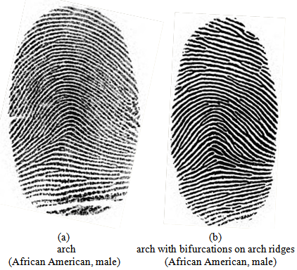 Arches  sc 1 st  Science and Education Publishing & Fingerprint Patterns and the Analysis of Gender Differences in the ...