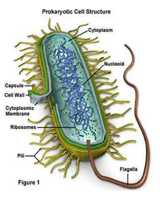 A Review on Recent Diseases Caused by Microbes