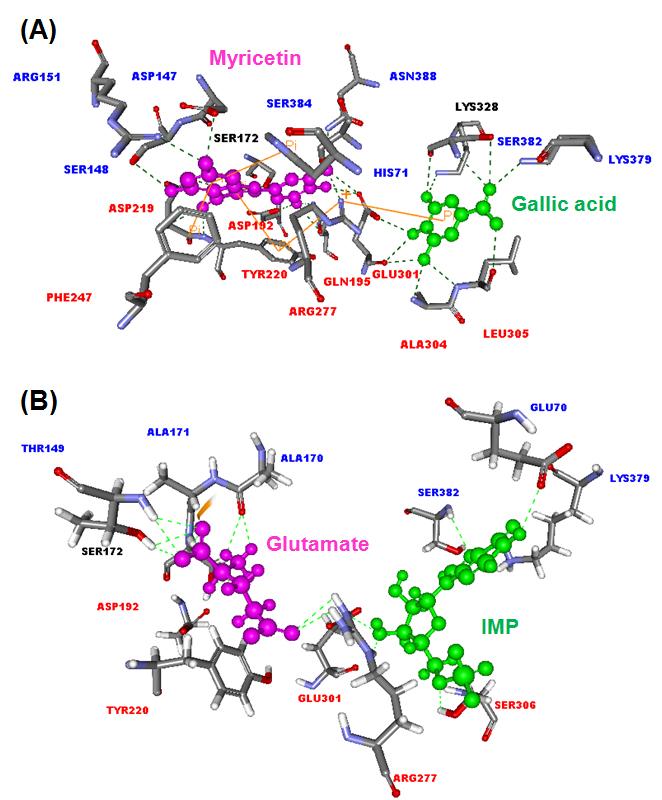 Concurrent Accumulation of Myricetin and Gallic Acid