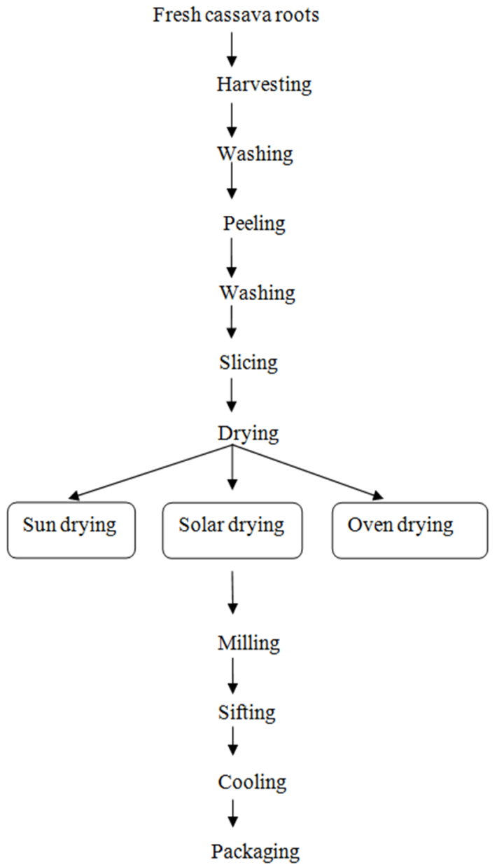 Figure 1  Flowchart for the production of cassava flour