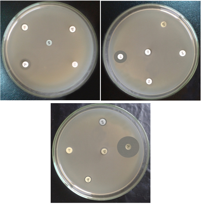 Multiple Heavy Metal and Antibiotic Resistance of <i