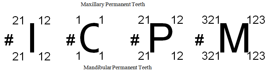 Learning of format of new tooth notation system a pilot study png ccuart Choice Image