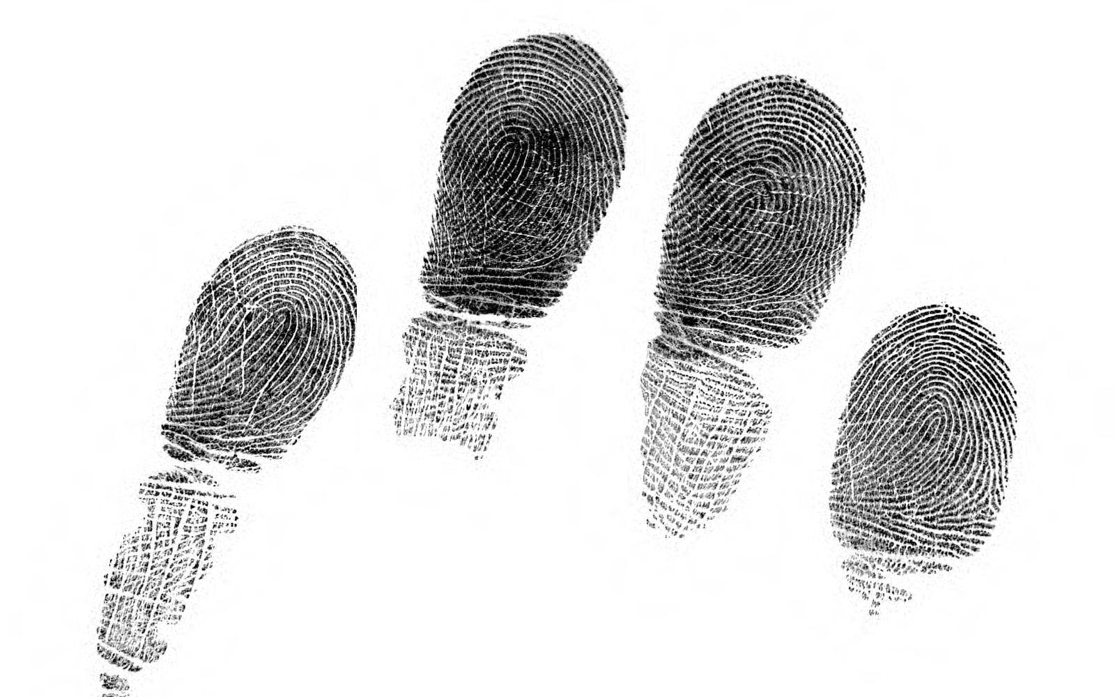Fingerprint Patterns And The Analysis Of Gender