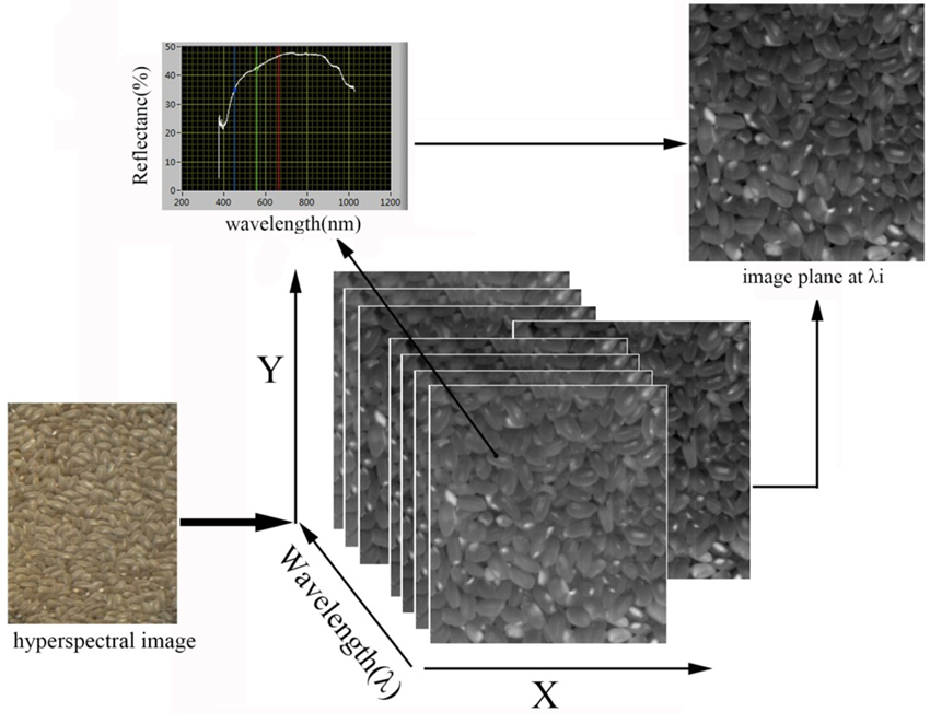 Detection Of Waxed Rice Using Visible Near Infrared