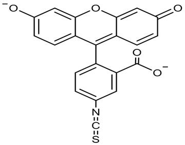 Bovine Serum Albumin Bioconjugation with FITC