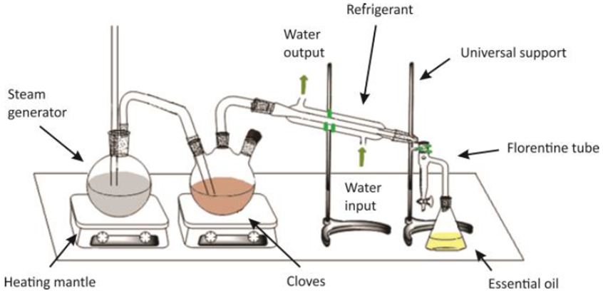 Figure 2 Steam Distillation Equipment Introducing Organic Chemistry Students To The Extraction Of Natural Products Found In Vegetal Species Science And Education Publishing